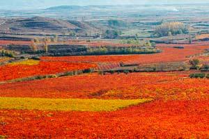 Viñedos de Marqués de Murrieta en otoño