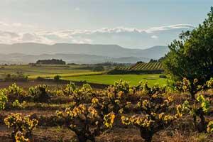 Paisaje de las viñas en Gramona