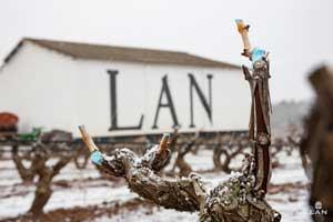 Viña Lanciano con sus cepas nevadas en Bodegas LAN