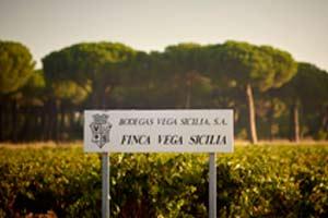 Foto del los viñedos de Vega Sicilia
