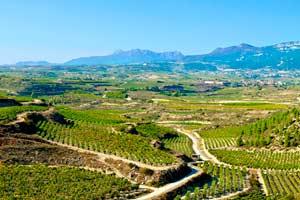 Vista de los viñedos desde la Bodega Luis Cañas