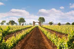 Viñas de la Bodega Barón de Ley en La Rioja