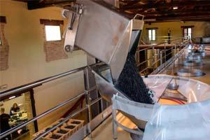 Elaboración del vino en Bodegas Mustiguillo
