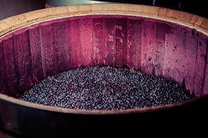 Fermentación del vino en la Bodega Marqués de Cáceres