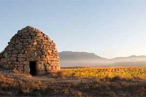 Guarda Viñas de la Bodega Roda