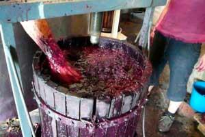 Elaboración del vino en 4 Kilos Vinícola