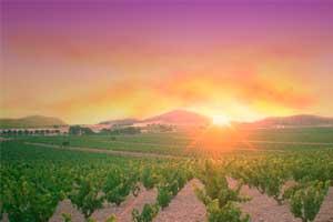 Puesta de sol en los viñedos de Casa Castillo