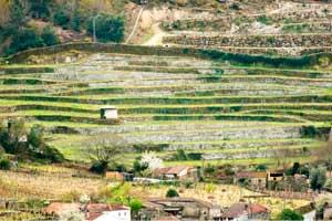 Vistas desde la bodega Coto de Gomariz a las viñas plantadas en terraza