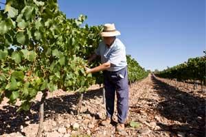 Trabajando en el viñedo en Bodegas Aragonesas