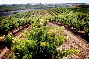 Viñas de Bodegas López Cristóbal