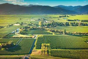 Vista aérea de los viñedos de Kim Crawford