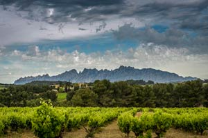 imagen de las viñas y bodega de Juvé & Camps