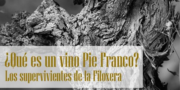 ¿Qué es un vino Pie Franco?